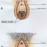Vulvoplastía: entérate porque ya es un boom